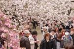 2016年(平成28年)大阪造幣局「桜の通り抜け」の開催期間決定!アクセス方法は?